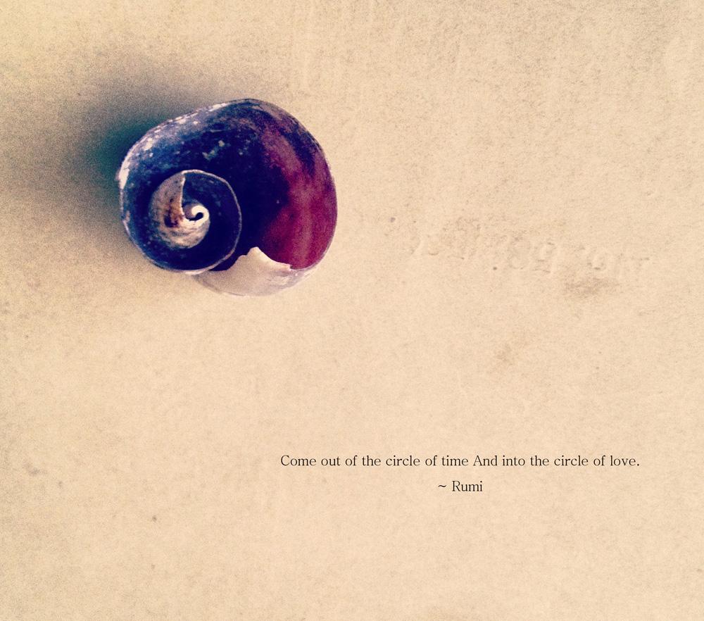 shell1 copy